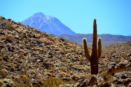atacama-desert-in-chile-barbar-berryman